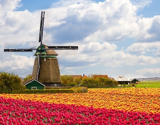 Blomstringstur til Holland